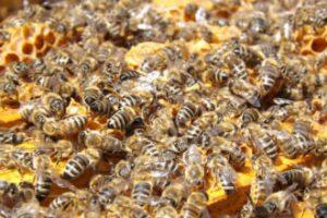 bijen-omslag-jaarverslag-2016-330-x-220